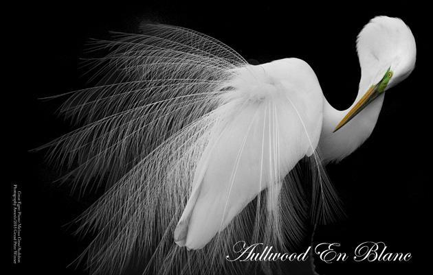 Aullwood en Blanc